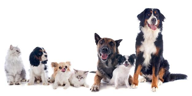 Perros y gatos Foto Premium