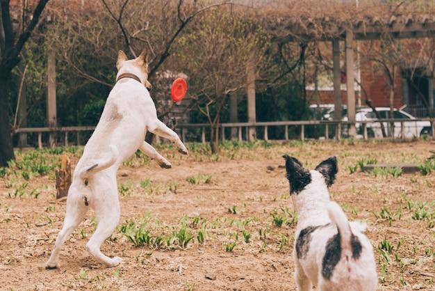 Perros jugando con el frisbee Foto gratis