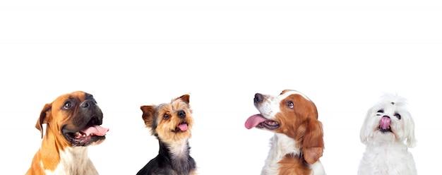 Perros pensativos mirando hacia arriba Foto Premium