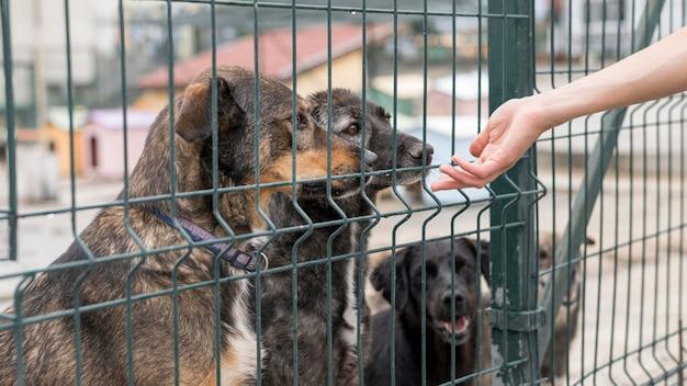 Persona buscando perros a través de la valla en el refugio Foto gratis