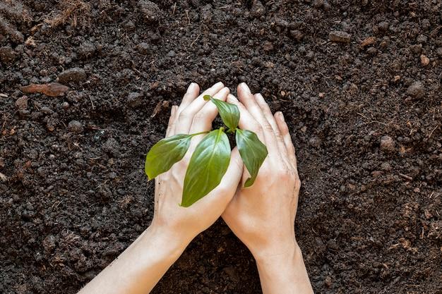 Persona plantando algo en el suelo Foto gratis