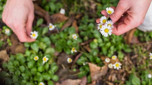 Persona recogiendo pequeñas flores blancas de la tierra Foto gratis