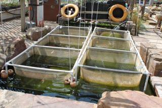 Pescado de vivero descargar fotos gratis for Vivero para peces