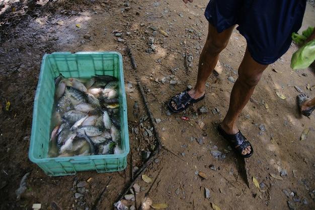 Pescador con capturas en una caja de plástico llena de peces Foto Premium