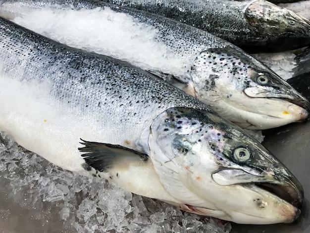 Pescados de color salmón frescos en el hielo en mercado o tienda. Foto Premium