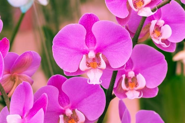 Pétalos de flores violetas. Foto gratis