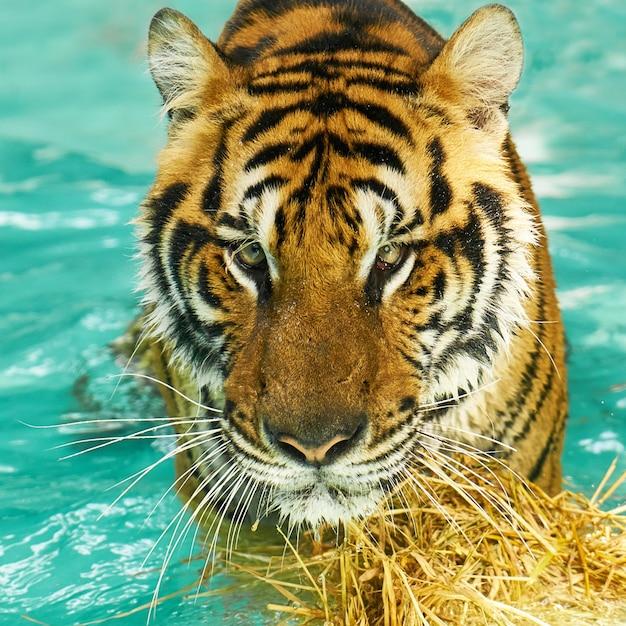 Phuket majestuosa naturaleza animal furioso Foto gratis