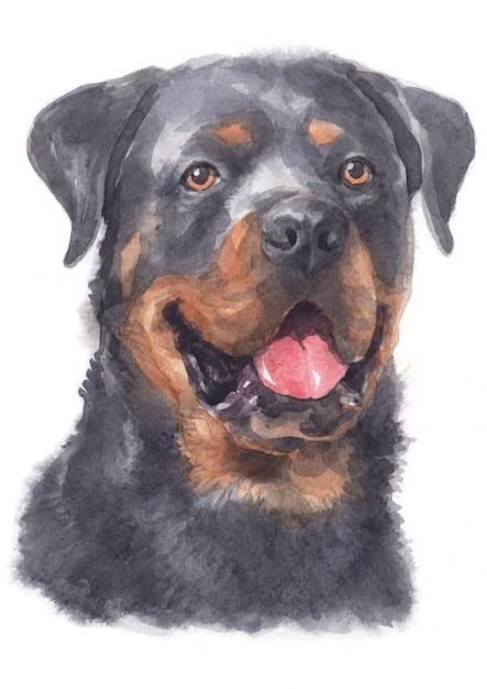 Pintura de acuarela de rottweiler Foto Premium