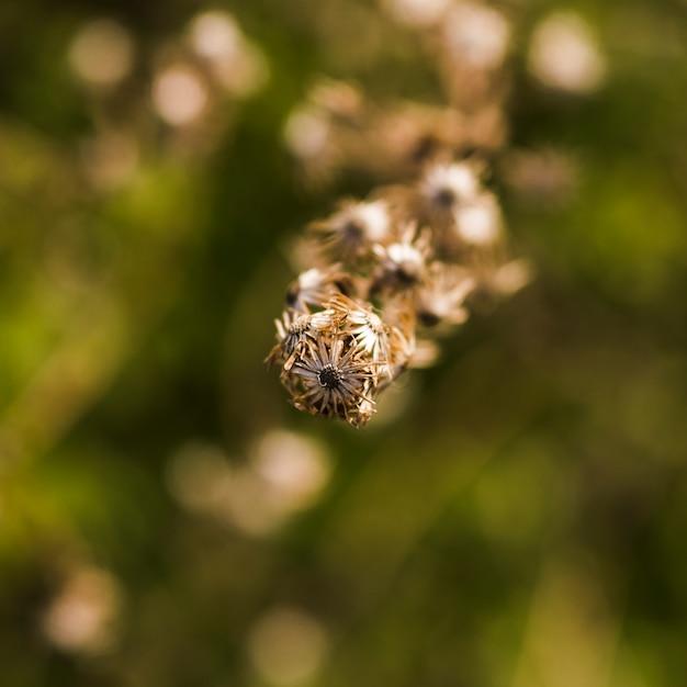 Plano macro de planta seca Foto gratis