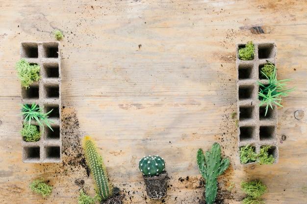 Planta de cactus en el fondo con bandeja de turba sobre fondo de madera Foto gratis