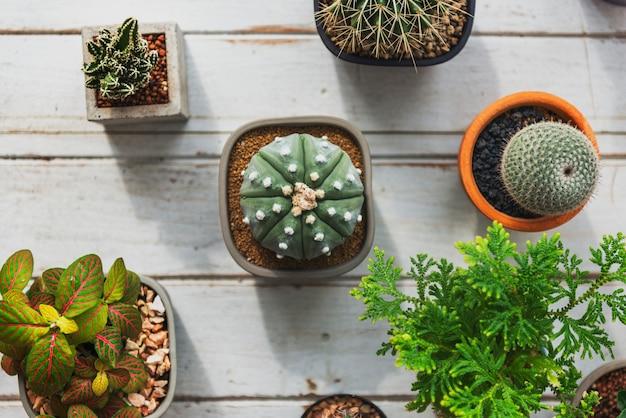 Planta de cactus houseplant nature concept Foto gratis