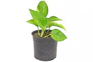 Planta en maceta descargar fotos gratis for Plantas aromaticas en macetas