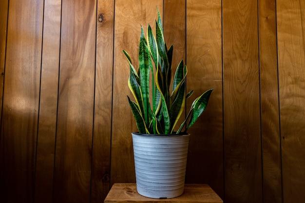 Planta de interior con hojas largas en una maceta contra una pared de madera bajo las luces Foto gratis