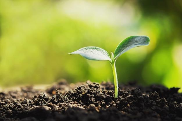 Planta joven nueva vida creciendo en jardín y luz solar. Foto Premium