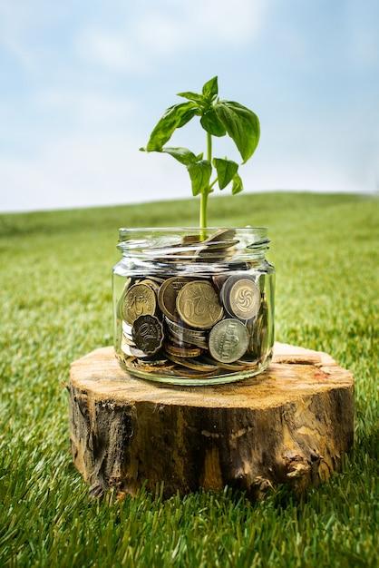 Planta que crece en tarro de cristal de monedas Foto gratis