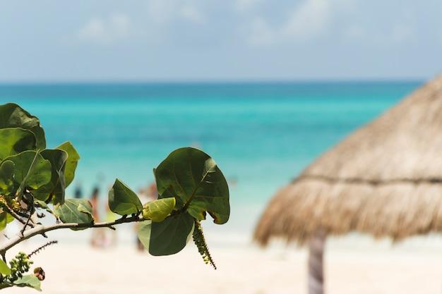 Planta ramita cerca de playa y mar azul Foto gratis