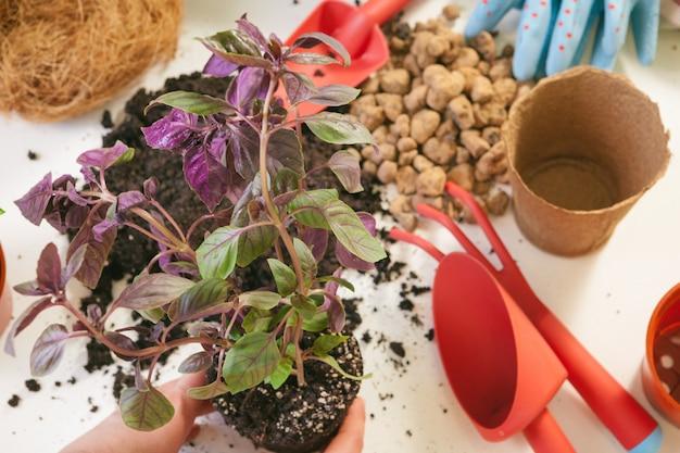 Planta de trasplante de manos de mujer en una maceta nueva Foto Premium