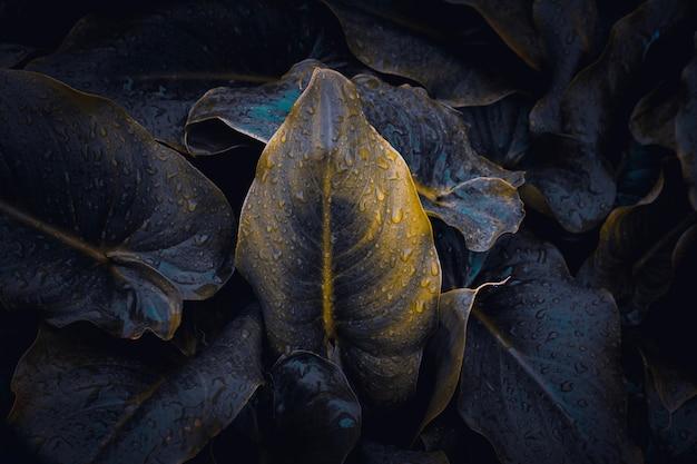 Planta verde hojas textura Foto Premium