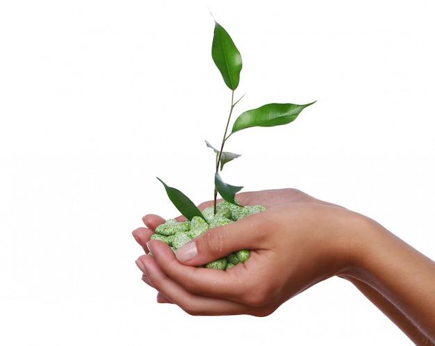 Planta verde en las manos Foto gratis