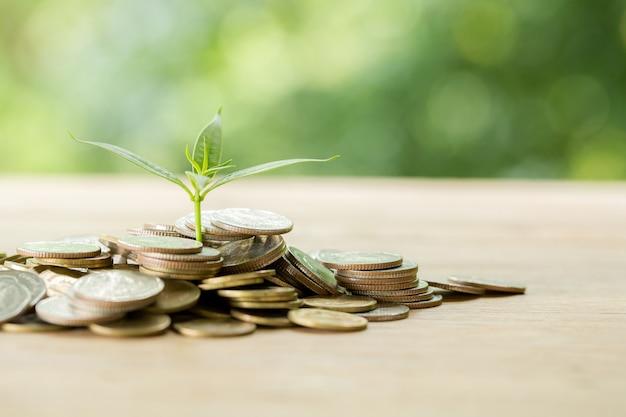 Plantar árboles en una pila de monedas con luz solar Foto gratis
