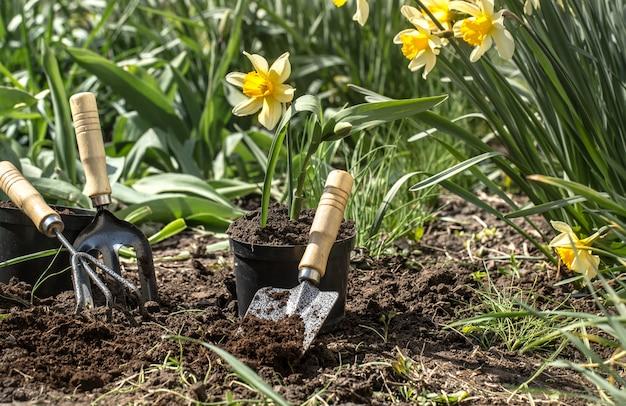 Plantar flores en el jardín, herramientas de jardín, flores. Foto gratis