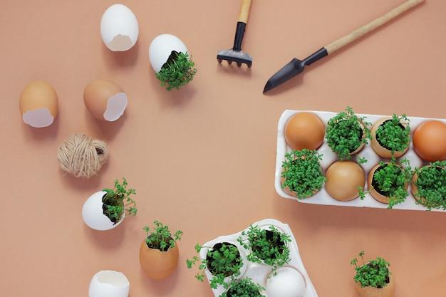 Plantar plántulas en cáscaras de huevo y cultivar micro-vegetación útil en casa. Foto Premium