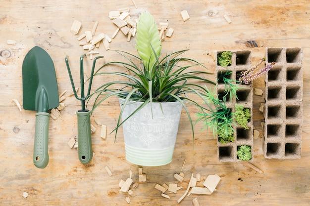 Plantas de bebé en bandeja de turba con herramientas de jardinería con planta en maceta en el escritorio de madera Foto gratis
