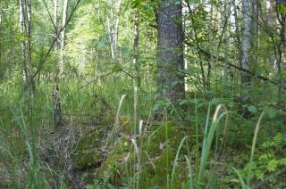 plantas forestales Foto Gratis