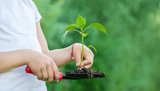 Plantas infantiles y plantas de riego en el jardín. Foto Premium