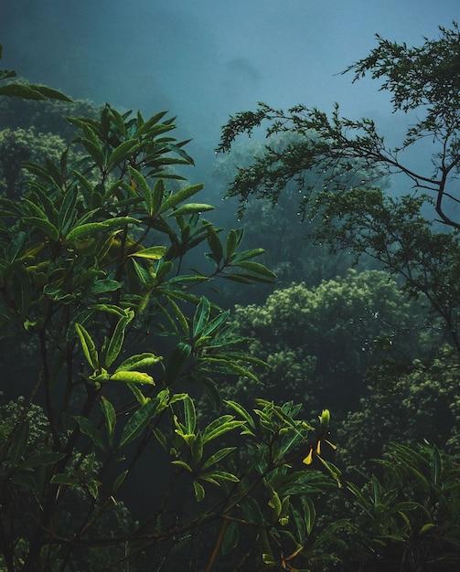 Plantas y ramas en la niebla Foto gratis
