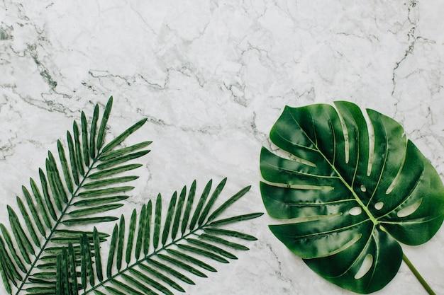 Plantas tropicales sobre un fondo de mármol Foto gratis