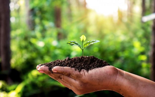 Plante árboles con monedas en las manos de las personas y verde natural. Foto Premium