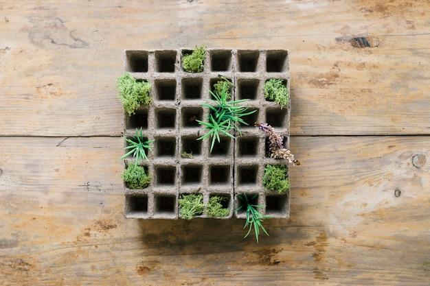 Plántulas de pequeñas plantas en bandeja de turba contra banco de madera Foto gratis