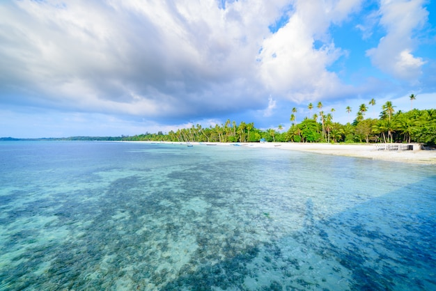 Playa de arena blanca con palmeras de coco agua turquesa transparente, destino de viaje tropical, playa desierta sin gente - islas kei, molucas, indonesia Foto Premium