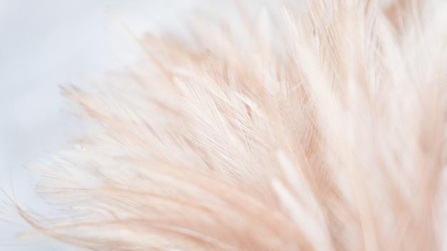 Pluma abstracta para el fondo Foto Premium