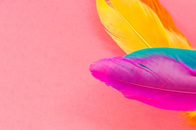 Plumas brillantes en rosa Foto gratis