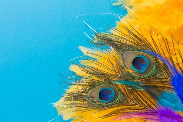 Plumas de pavo real elegantes con primer plano Foto gratis