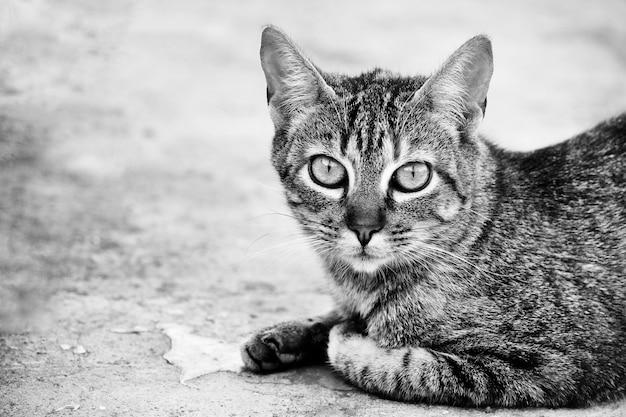Fotos de cogida en blanco y negro gratis