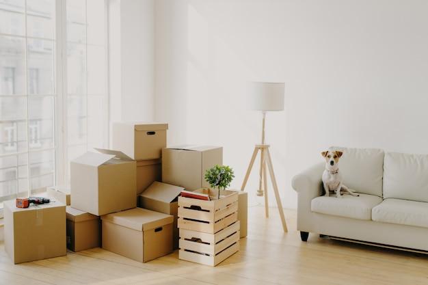Precioso cachorro de pedigrí se sienta en un cómodo sofá en la sala de pila de cajas Foto Premium