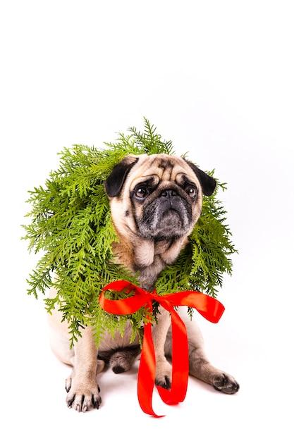 Precioso perro con corona de navidad en el cuello Foto gratis