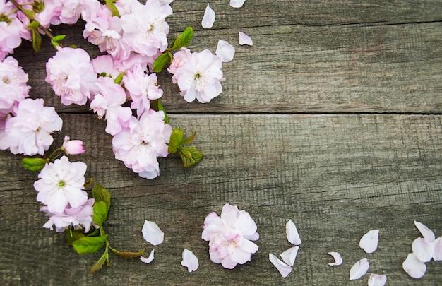 Primavera flor de sakura Foto Premium