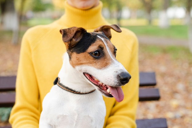 Primer hermoso perro mirando a otro lado Foto gratis