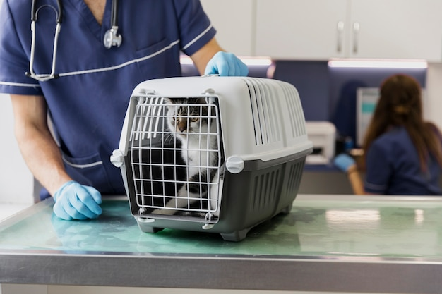 Primer médico con gato en jaula Foto gratis