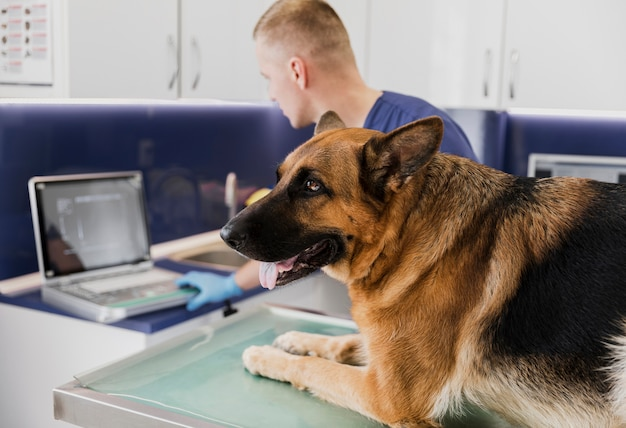 Primer médico que controla la salud del perro Foto gratis