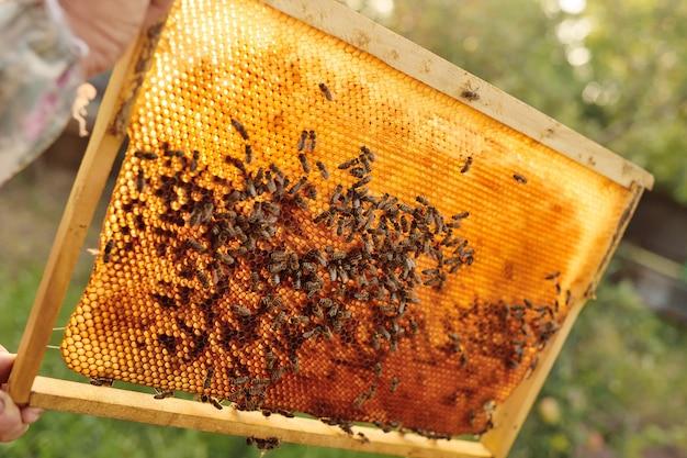 Primer plano de las abejas en un marco para las abejas en un tragaluz contra una luz de fondo de la luz solar Foto Premium