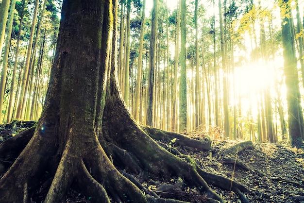 Primer plano de árbol con sus raíces Foto gratis
