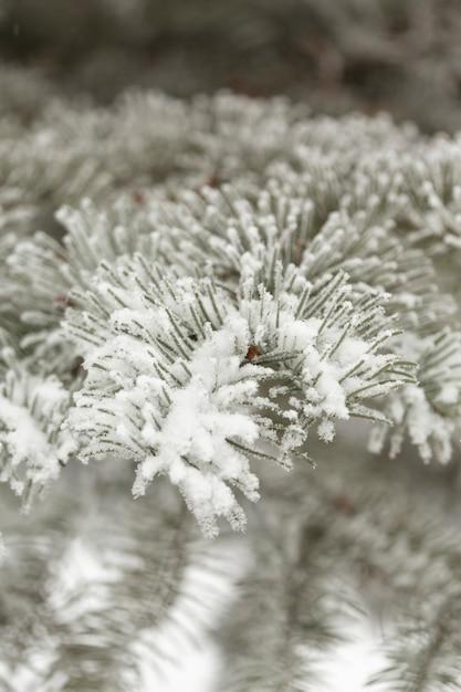 Primer plano congelado pino deja con nieve Foto gratis