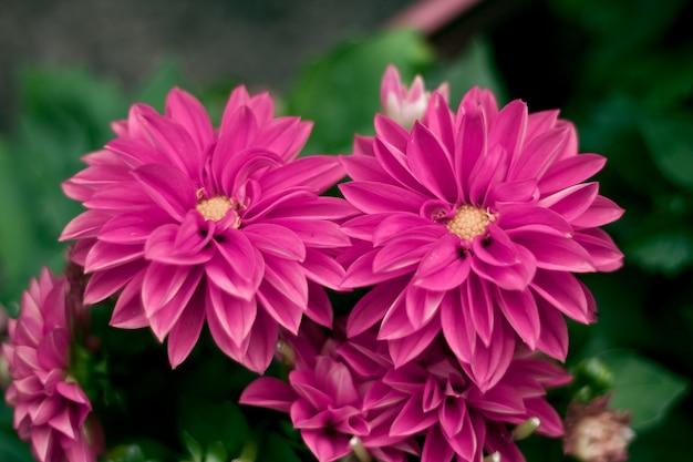 Primer plano de flores de color púrpura una al lado de la otra en un fondo verde Foto gratis