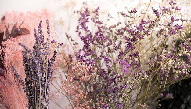 Primer plano de flores de lavanda Foto gratis