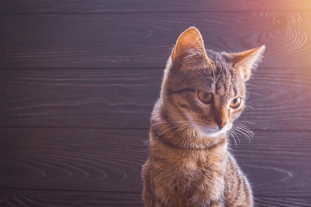 Primer plano de gatito sobre un fondo de madera con espacio de copia Foto Premium